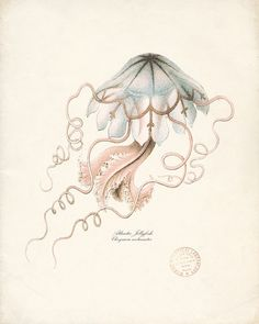 Vintage Atlantic Jellyfish Print