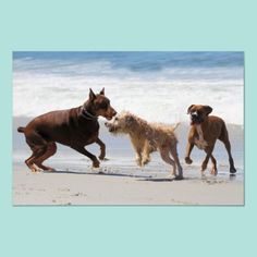 Picture of Red Doberman and Boxer Playing with Mixed Breed on Beach stock photo, images and stock photography. Boxer Dogs, Pet Dogs, Pets, Baby Puppies, Dogs And Puppies, Doberman Pinscher Puppy, Puppy Names, Dog Carrier, Mixed Breed