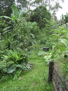 Permaculture Pathways ::: Visit to a Permaculture Food Forest