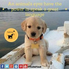An Animal's eyes have the power to speak a great language. This is promotion via social media. #TalkFind