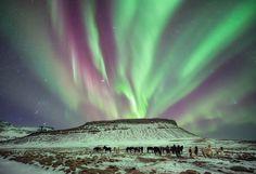 Horses under an aurora in Iceland [16001094]