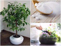 Egy teáskanál cukrot szórt a növények földjére mielőtt megöntözte, azóta rengeteg virágot hoznak! - Bidista.com - A TippLista! Herb Garden, Tricks, Planting Flowers, Kustom, Herbs, Gardening, Floral, Goblin, Plant