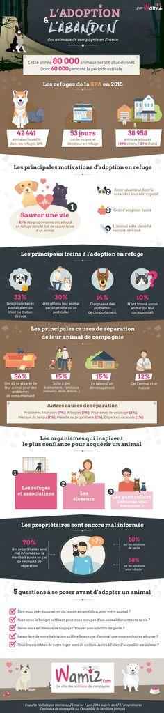 Chaque année, ce sont 80 000 animaux de compagnie qui sont abandonnés, dont près de 75% durant l'été. Dans son infographie exclusive, Wamiz revient sur les causes de ces abandons massifs et dresse un état des lieux de l'adoption en France.