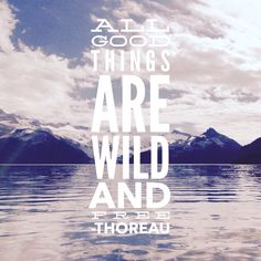We always feel more free while in the wild. #backpacking #hiking #pnw #backcountry #wilderness #quote