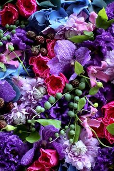 ✿⊱╮ Fruits and Flowers ✿⊱╮ Art Floral, Motif Floral, Purple Flowers, Beautiful Flowers, Exotic Flowers, Yellow Roses, Pink Roses, Illustration Blume, Flower Aesthetic