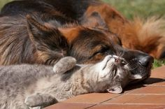 Cute Dog and Cat out lying under the sun