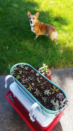 Replanted a bunch of tiny props! And a bonus Corgi!!
