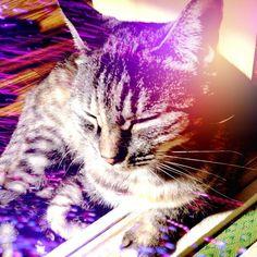 Let sleeping cats lie.... #cameran @fa1c0n1338-#cameranapp