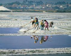 Working on the salt pans of Setúbal, Portugal