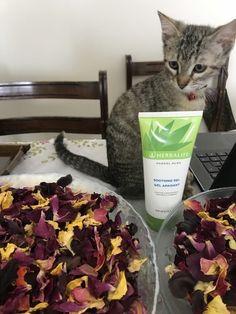 Herbalife provides the Gold Standard in consumer protection. Herbalife, Jelsa, Aloe, Aloe Vera