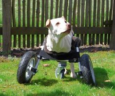 A few months ago we discovered Luisa, a handicapped puppy who was born without forelegs on the website of an animal protection organisation (www.pro-tier.de) and decided to build a 3D-printed wheelchair for her. In the meantime we finished the wheelchair and have adopted Luisa. This project is open-source and we want to give everybody the opportunity to help a handicapped animal with this instructable and the 3D-Files we uploaded with it.The Wheelchair comes in two sizes (The bigger size…