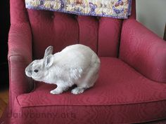 Bunny makes sure the chair meets her requirements - November 13, 2015