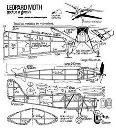 337LEOPARD-MOTH