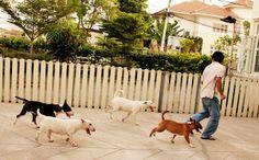 Evening exercise. #BullTerrier #Bully #Dog #Nicki #Cute #Hoyaa