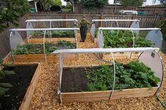 start-a-vegetable-garden-in-winter
