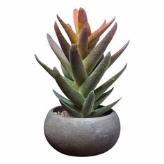 Abigail Ahern Faux Yakima Succulent: Charming faux succulent plant by Abigail Ahern in pot. We're really excited about the latest additions to our faux range, They're lush, tropical, and sure to invigorate any interior - from sweet little foliage buds and succulents to great big jungle-esque palms.  We pride ourselves in featuring the most naturalistic faux flowers and botanicals - they're seasonal, high quality and beautifully realistic. We favour natural and organic over cultivated and…
