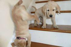 i <3 puppies!