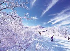 스키 - 한국 겨울 레저 관광