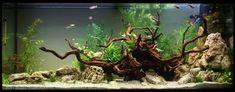 AGA 2011 Aquascaping Contest: #222 Diskus Aquarium, Aquarium Design, Planted Aquarium, Aquascaping, Fish Tank Terrarium, Fish Tank Design, Amazing Aquariums, Aquarium Landscape, Aquarium Accessories