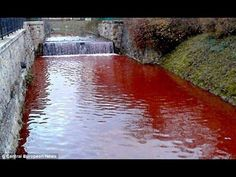Water Turns BLOOD RED Overnight & more End-Time Headlines that will PROVE we're the last generation Bible Prophecies Fulfilled, The Way Back, End Of Days, Armor Of God, End Time Headlines, Blood, Color Change, Things To Know, Dreaming Of You