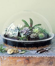 terrarium...remember these were all the thing back in the day? I'm definitely making one!