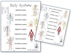 Free Worksheets: Human Body Systems. Cc cycle 3 - use this to introduce the following week's memory work.