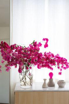 Design Love Fest bougainvillea in vase Flower Power, Love Fest, Interior Paint Colors, Interior Painting, Living Room Paint, Living Rooms, Exotic Plants, Colorful Interiors, Decoration