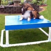 The pause table is an essential obstacle on almost any agility course. It is used to show stability and control between dog and handler, and it is vital to success within the agility ring. The pause table is a fairly simple obstacle to construct and will help to ensure your dog's success as an agility competitor.