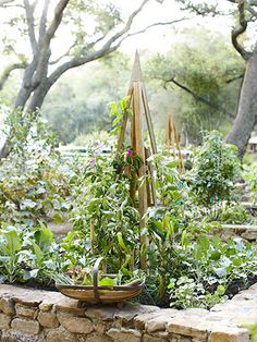 Banana peppers climb a cedar obelisk in one of this kitchen garden's raised beds, constructed using stones gathered on the property.
