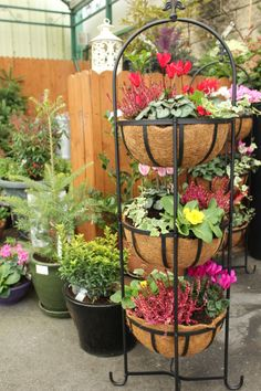 Winter Garden Displays Great Christmas Gifts, Great Gifts, Winter Garden, Deck, Gift Ideas, Make It Yourself, Plants, Front Porches, Plant