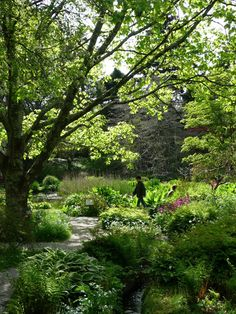 went to Mount Usher County Wicklow at the weekend.  Brilliant wild Robinsonian planting which I want to copy at Chelsea