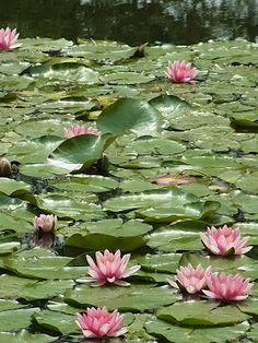 Monet's Garden: ririnono diary
