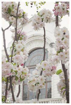soft blossom pink, Paris ~ Ana Rosa, Paris