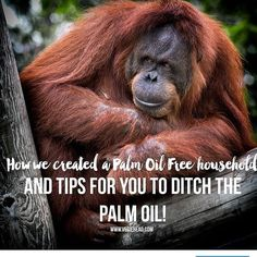Judging by the reaction of the post I shared on FB last night  that I shared from 7.30 Report many of you weren't aware of the widespread destruction of rainforests in Indonesia and throughout Asia for the purpose of planting palm oil trees.  And if you were aware awesome! But it even shocked me how high the chain actually goes.  Palm oil is known by over 200 different names.  It's in over half of the products you find in a supermarket.  It's in food deodorant cleaning products skincare make…