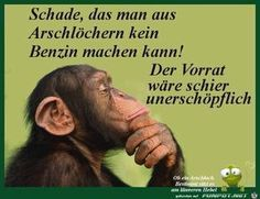 Deep Thoughts of the Common Ape Frases Abraham Hicks, Daily Quotes, Best Quotes, Favorite Quotes, Funny Wild Animals, Think Before You Speak, Motivational Quotes, Inspirational Quotes, Humor Grafico
