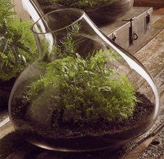 Roost Medium Recycled Glass Terrarium