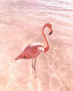 Pink Flamingo #12thtribevibes #shop12thtribe
