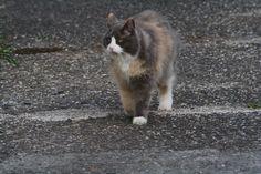 Phoeby Kat | Pawshake Kruishoutem (lozer)