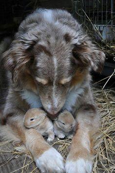 Adorable. The Dodo - 21 Adorable Bunnies - 21 Bunnies You Won't Believe Actually Exist ...