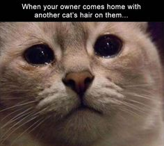 Funny, Memes, Pictures: funny-animalss-10