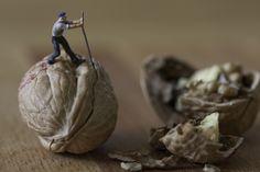 Jack the wallnut cracker