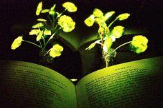 Biliminsanları kendi enerjisi ile ışık yayan bitkiler geliştirmeyi başardı