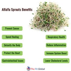 Alfalfa Sprouts Benefits #cancer #heart #health #thefitglobal