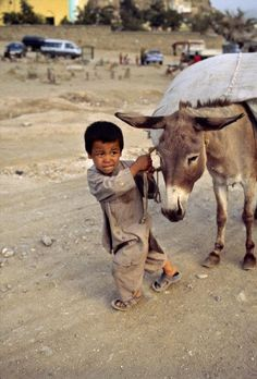 Afghan boy and his donkey.  It does not look like that donkey is cooperating.  If we only knew the lives of these young boys, who have to go over mountains(even in winter) by foot carrying goods, to have a donkey is a luxury.  Their lives are very difficult.