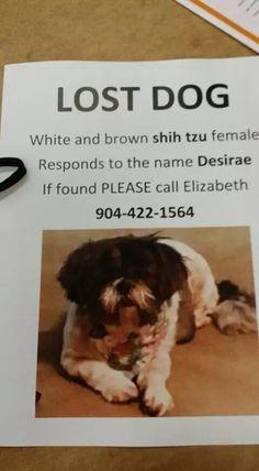 Lostdog 7 3 14 Desirae Jacksonville Fl Shihtzu Female White Amp Brown Cypress Cove Apartments Atlantic Blvd 904 Losing A Dog Brown Shih Tzu Find Pets