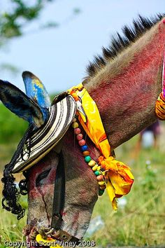 Festival del Burro en Colombia