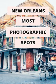 New Orleans is honestly a photographer's dream! What's not to love? There's the French-inspired architecture, the cobblestone streets,
