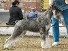 Schnauzer Breed, Schnauzer Grooming, Standard Schnauzer, Giant Schnauzer, Schnauzers, Animals And Pets, Dog Cat, Ann, Death