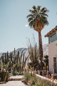 Whimsical Palm Springs Wonderland Wedding at The O'Donnell House