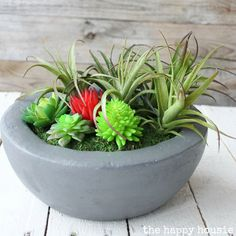 How to make your own DIY faux concrete bowl succulent planter using a FloraCraft® foam ball and some other basic craft supplies!